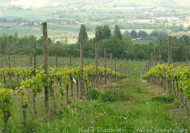 Best Verdicchio wines