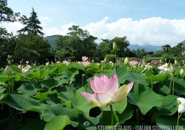 Garden Lake Maggiore