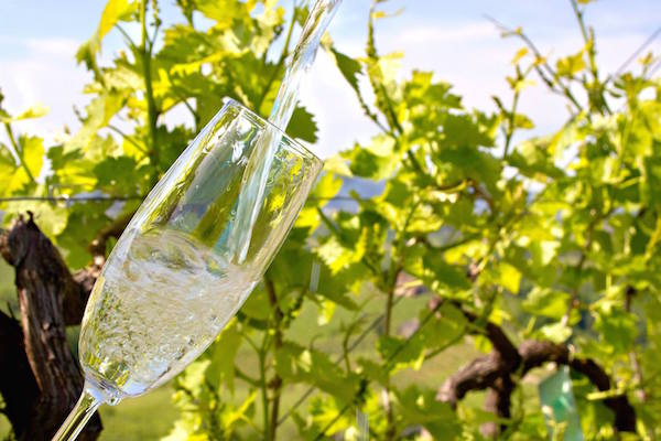 Veneto Prosecco wine