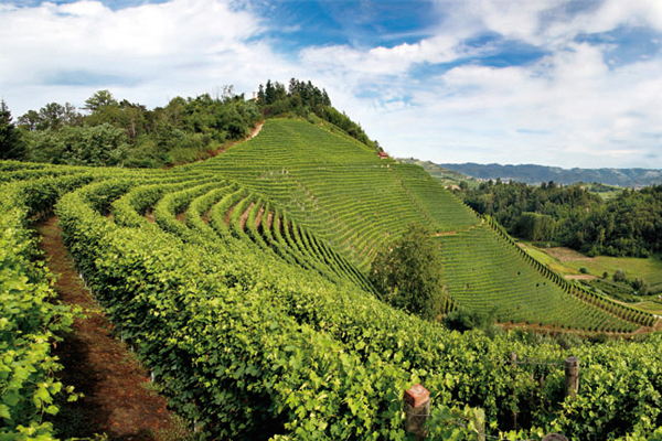 Wine region Piedmont