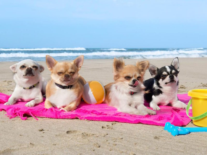 Beach etiquette in Italy: dogs are not allowed